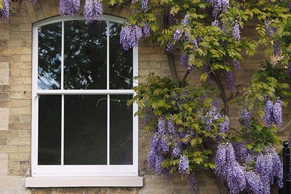 About Roseview Windows